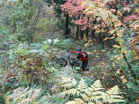 2014.11.28_bike_01.jpg